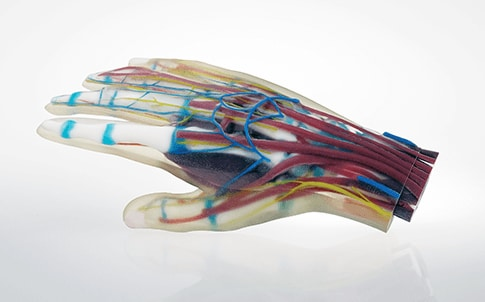 The multi-material hand model incorporates soft tissue with hard bone in a single print.